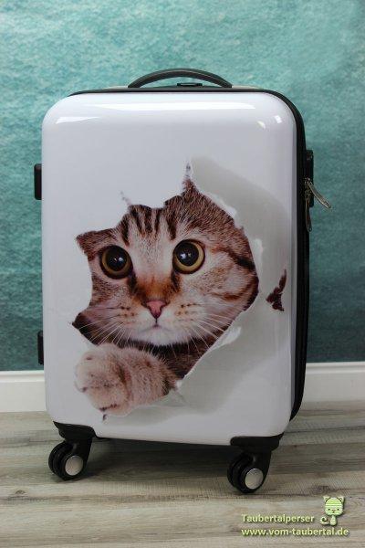 wenn crazy cat ladies eine reise tun taubertalperser. Black Bedroom Furniture Sets. Home Design Ideas