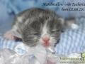 Marshmallow-vom-Taubertal-06-08-2017