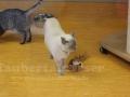 Pet-Center-4-Taubertalperser