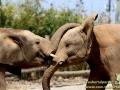 Shanghai-Taubertalperser-Elefantenchallenge