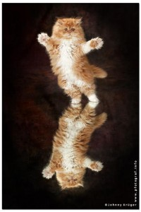 Dancing FortunaDancing Fortuna