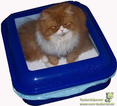 verhalten perserkatzen taubertalperser kuschelperser katzen. Black Bedroom Furniture Sets. Home Design Ideas