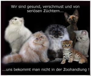 zoohandlung