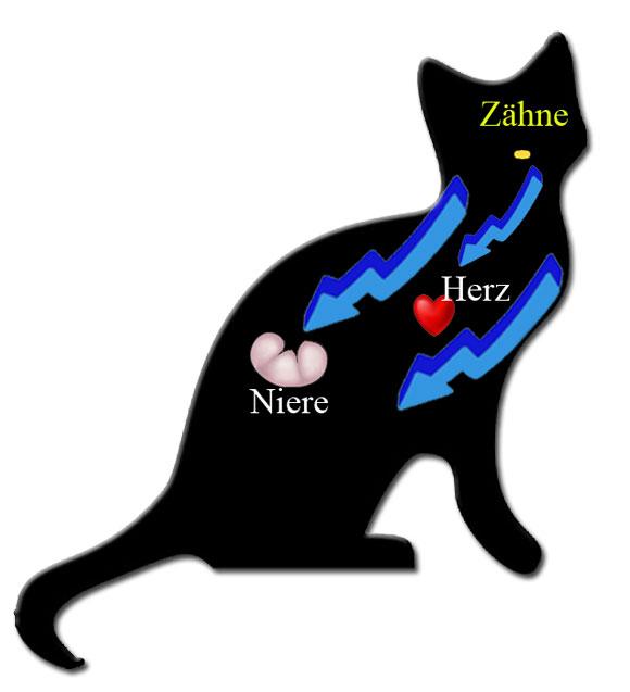 Katzen_Herz_Niere