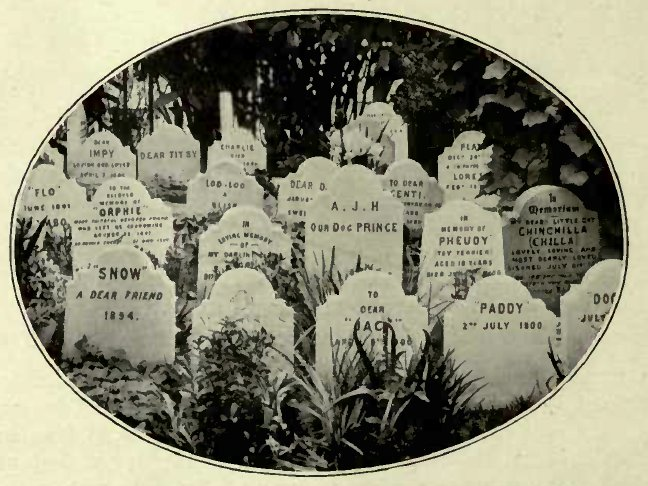 CATS' TOMBSTONES IN THK DOGS' CKMETKKV, HYDK PARK. (Photo: Cassell & Co., Ltd.)