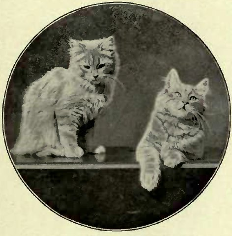 KITTENS BELONGING TO MISS BROMLEY