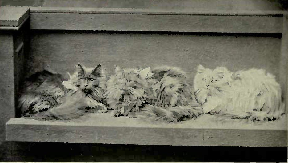 NEUTER PETS OWNED KY MRS. HASTINGS LEES. (Photo: The Royal Central Photo Co., Bournemouth.)