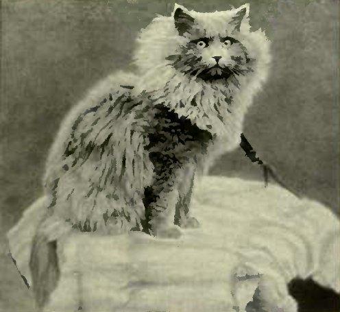 "MRS. GREGORY'S "" SKELLIXGTHORPE PATRICK."" (Photo :. W. J. Smith, Lincoln.)"