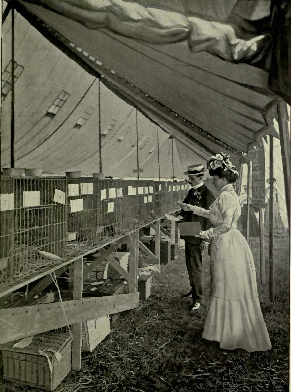 RICHMOND CAT SHOW: JUDGES AT WORK. (I'hoto : Cassell & Company, Limited.)
