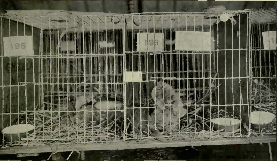 TYPE OF CAGE AT THE RICHMOND CAT SHOW. {Photo: Cassell & Company, Limited.)