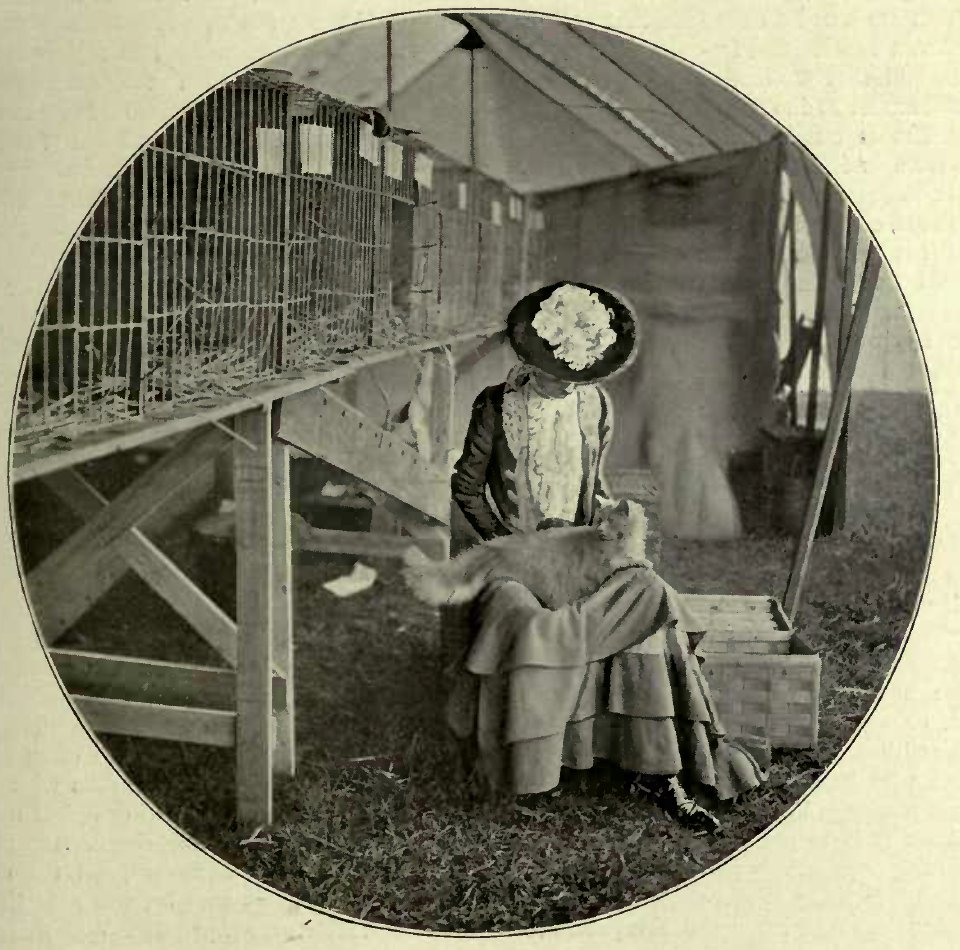 THE TOILET - MRS. PETER BROWN AND HER PRIZE CAT. (Photo : Cassell & Company, Limited.)
