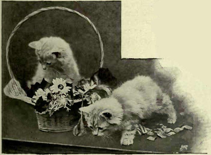 KITS WITH A TASTE FOK FLOWERS. (Photo : Mrs. S. F. Clarke.)