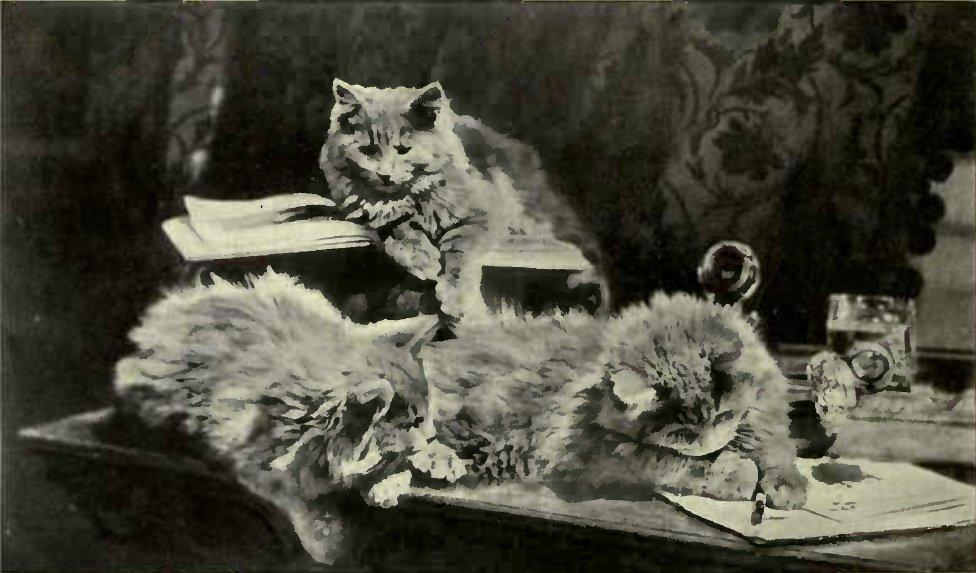 """ MISCHIEF"" (Photo: Mrs. S. F. Clarke.)"