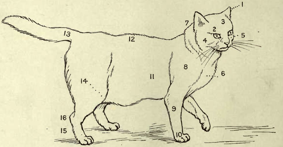POINTS OF A CAT