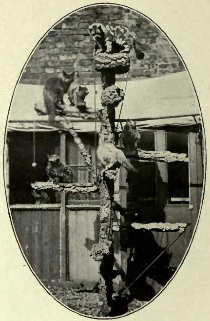 THE IMITATION TREE, MRS. CLARKE'S CATTERY (Photo: Mrs. S. F. Clarke.)