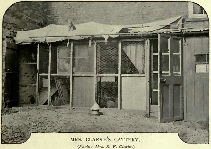 MRS. CLARKE´S CATTERY. (Photo: Mrs. S. F. Clarke.)