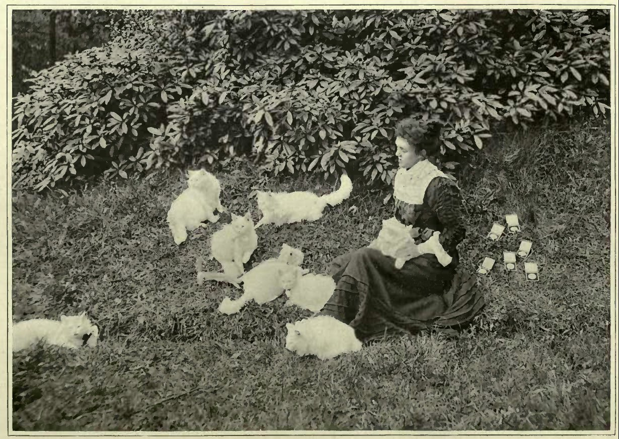 MRS. PETTY WITH HER WHITE PERSIANS.