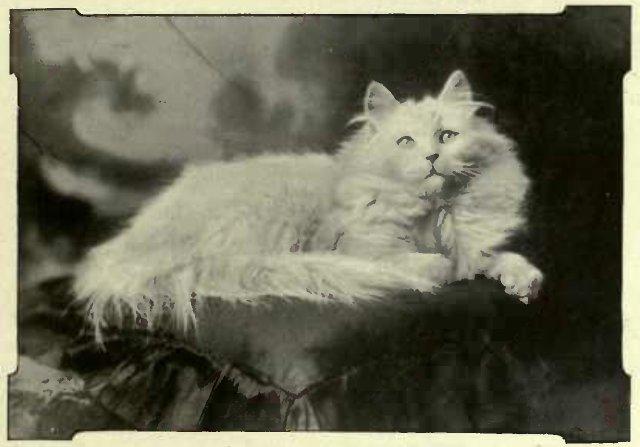 """ WHITE BUTTERFLY."" THE PROPERTY OF Miss WHITE ATKINS. (Photo: E. E. Lipputt, Leamington.)"