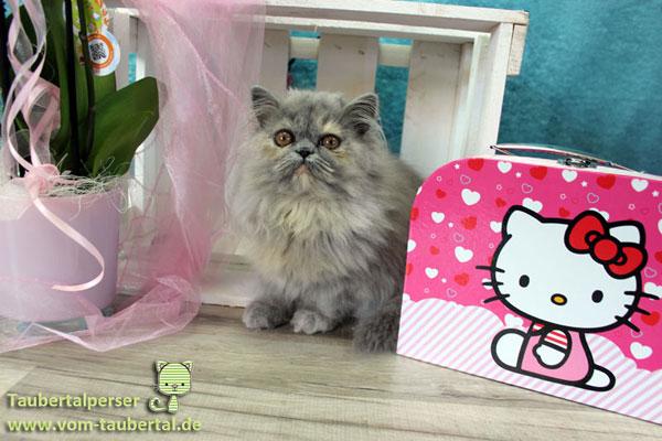Abgabealter, Kitten, Taubertalperser