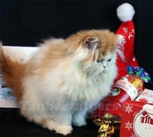 Katzen unter Weihnachtsbaum