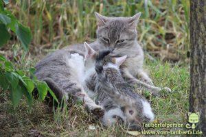 Bauernhof Katzen Taubertalperser