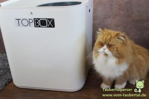 Top Box Taubertalperser Katzenklo