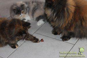 Anifit Provital Katzensnack Taubertalperser
