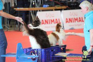 Animal DogDancing Stuttgart Taubertalperser