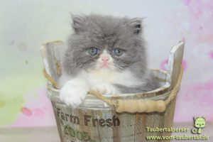 Katzennamen, Taubertalperser, Marshmallow