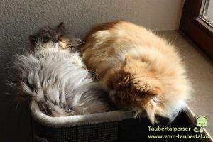 Trixie Cat Tower Jorge Taubertalperser