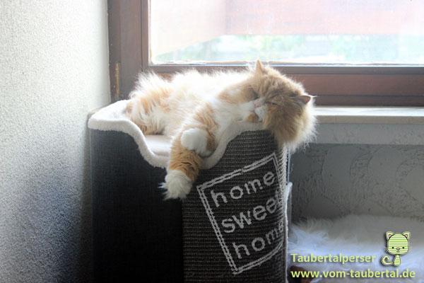 produkttest trixie cat tower jorge taubertalperser. Black Bedroom Furniture Sets. Home Design Ideas