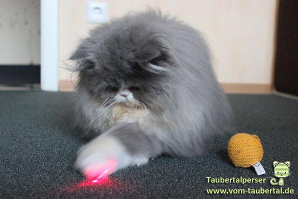 Taubertalperser Marshmallow, Prinz Wuschel