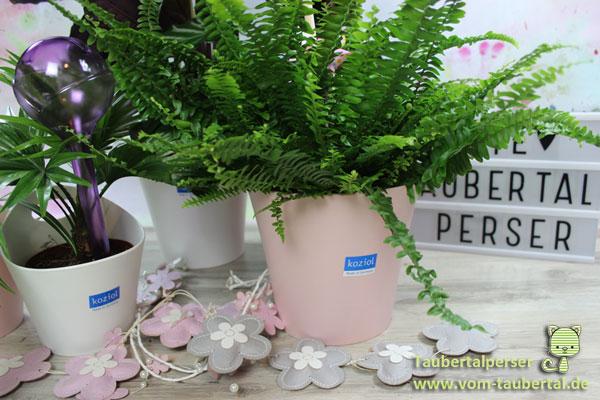 zimmerpflanzen für wohnzimmer ungiftige pflanzen f r katzen gr nes wohnzimmer