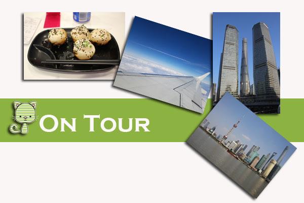 Shanghai, Taubertalperser, Travel, Reise, Katzen