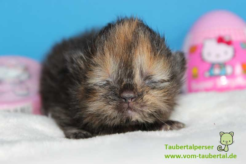 K-Babies Taubertalperser 10