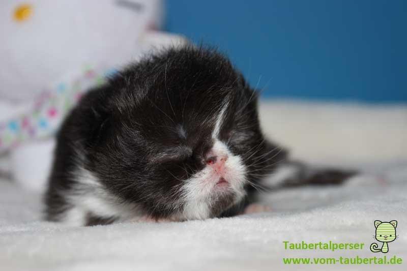 K-Babies Taubertalperser 11