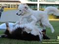 Animal-2018-Taubertalperser-Hunde