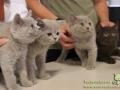 Arena-of-Cats-08-Taubertalperser