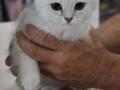 Arena-of-Cats-10-Taubertalperser