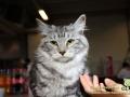 Arena-of-Cats-13-Taubertalperser