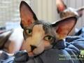 Arena-of-Cats-16-Taubertalperser