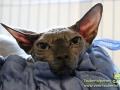 Arena-of-Cats-17-Taubertalperser