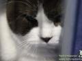 Arene-of-Cats-Taubertalperser-Katzenausstellung-08