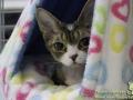 Arene-of-Cats-Taubertalperser-Rene-Bohn05