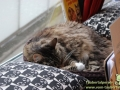 Cats-Cafe-Taubertalperser-05