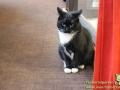 Cats-Cafe-Taubertalperser-06