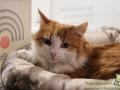 Cats-Cafe-Taubertalperser-10