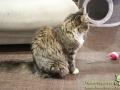 Cats-Cafe-Taubertalperser-11