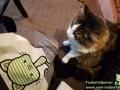 Cats-Cafe-Taubertalperser-14