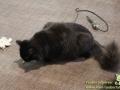 Cats-Cafe-Taubertalperser-15